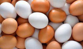 مخالفت صریح وزیر کشاورزی با ممنوعیت صادرات