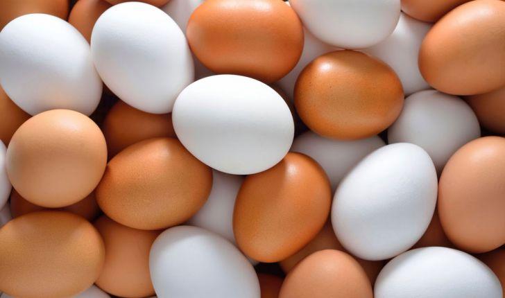 کاهش ۲۵درصدی تولید تخم مرغ/دولت در تهیه واکسن آنفلوانزا کمک کند
