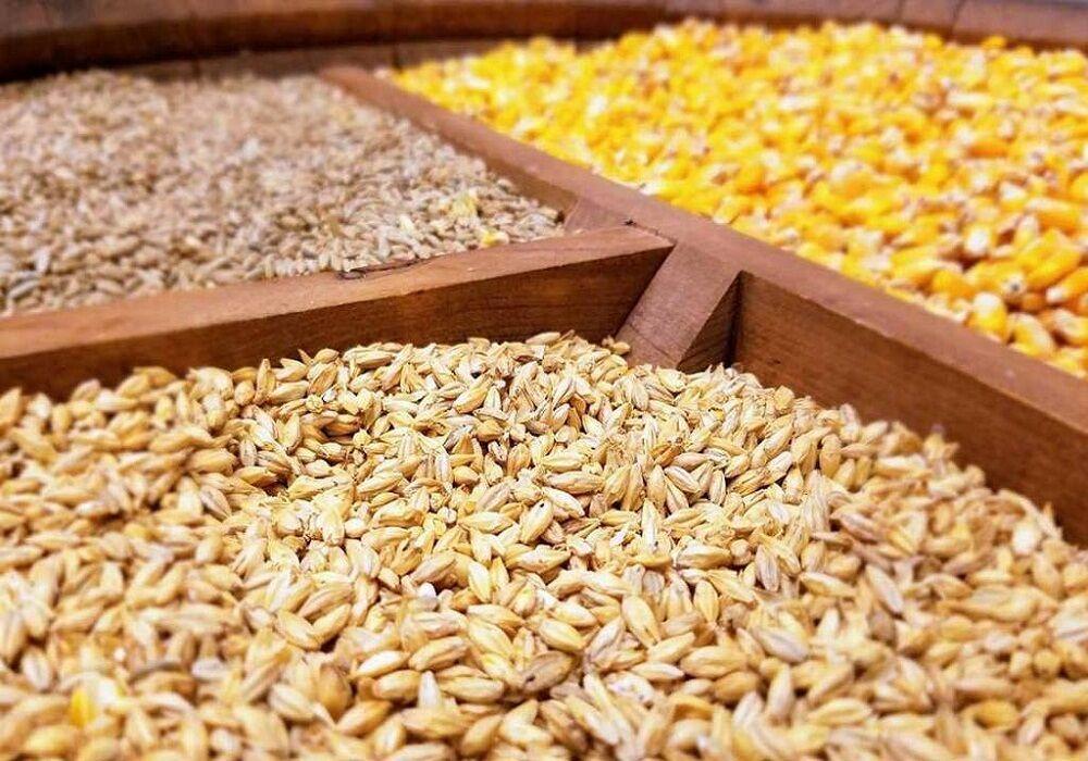 پنج میلیون یورو بذر ذرت دامی در گمرکات خوراک موشها میشود