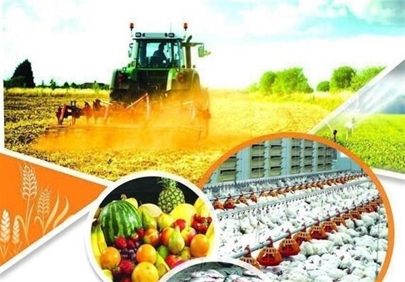 رشد ۶۶ درصدی صادرات محصولات بخش کشاورزی و صنایع غذایی