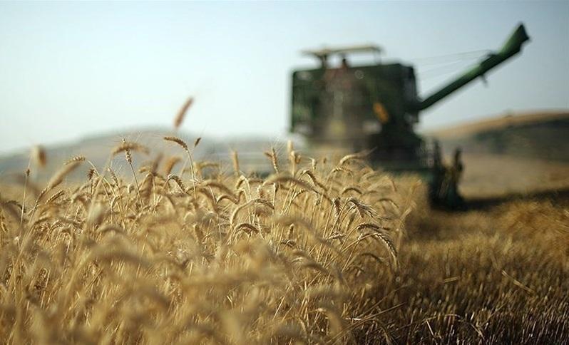 ایران ۱ میلیون تن گندم از بازار جهانی خرید
