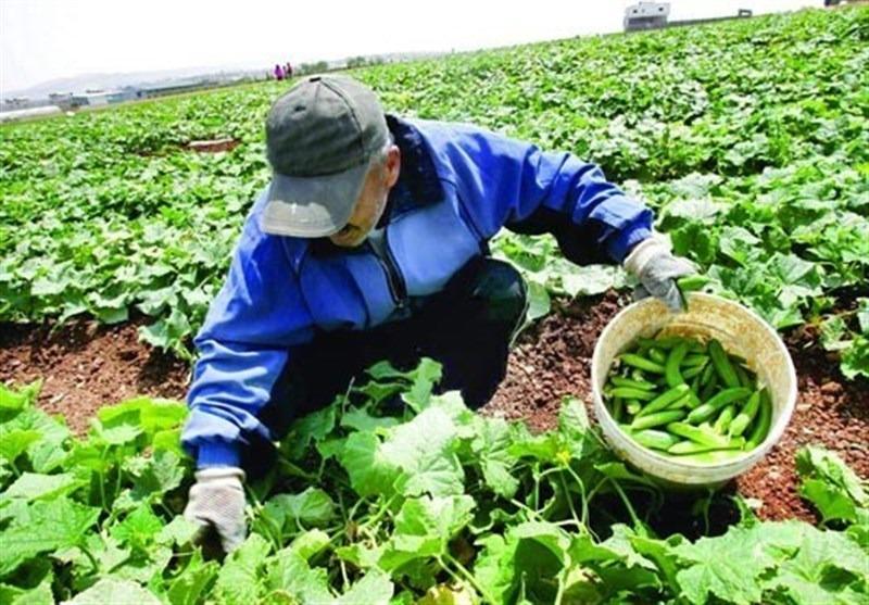 درآمد بالای ۶۰ میلیون تومان کشاورزان مشمول مالیات می شود