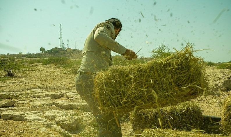 سرنوشت نامعلوم ۱۰۰۰ تن بذر پایه علوفه در گمرک به دلیل اختلاف ۳ دستگاه دولتی