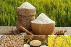 افزایش ۴۰ درصدی قیمت برنج در پاییز ۹۹