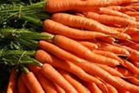 کاهش ۳۰ درصدی صادرات هویج در ماههای اخیر