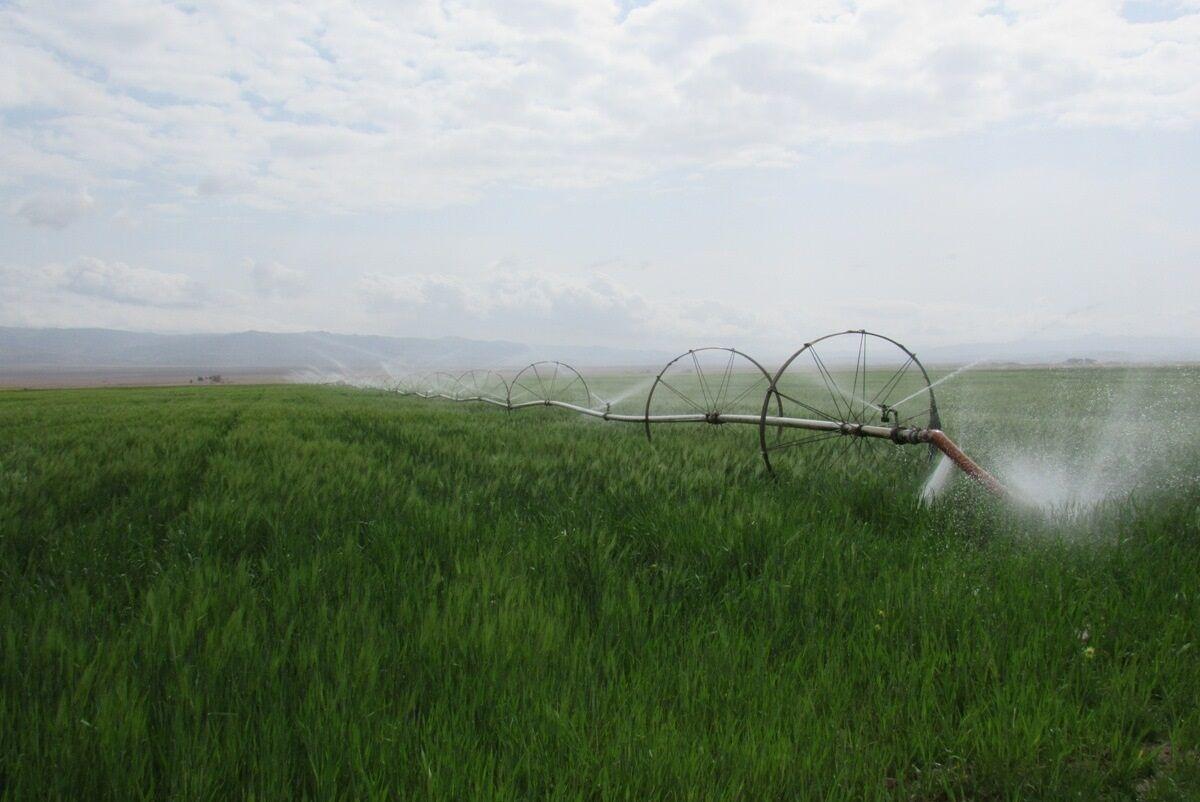 اجرای سامانههای آبیاری نوین در یک سوم اراضی مستعد خراسان جنوبی