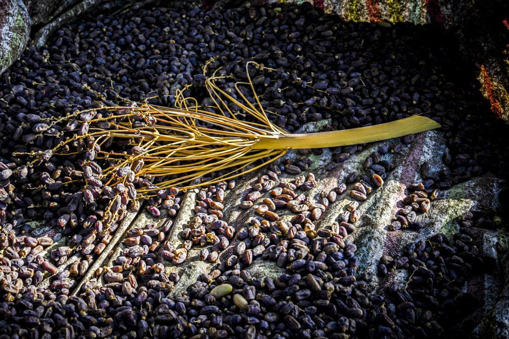 تولید خرما شاهرود امسال ٢٠٠ تن برآورد میشود
