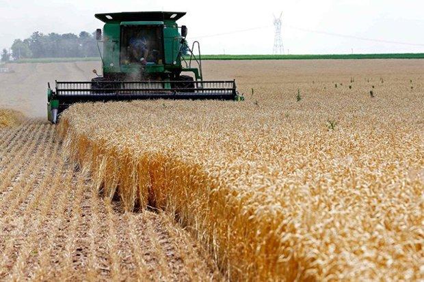 رشد ۳ درصدی خرید گندم نسبت به سال قبل
