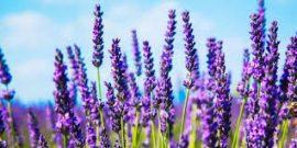 ارزش صادرات گیاهان دارویی مرتعی به ۱۰۰ میلیون دلار رسید