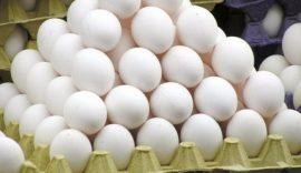 صادرات ۲۸ هزار تنی تخممرغ