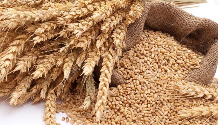 گندم در سال آینده به بورس کالا میرود؟