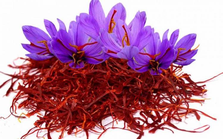صادرات چمدانی زعفران به ۳۰۰ تن رسید